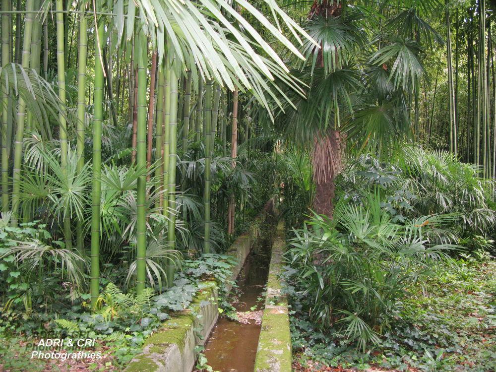 Bambouseraie de Prafrance Anduze by ADRI & CRI Photographies