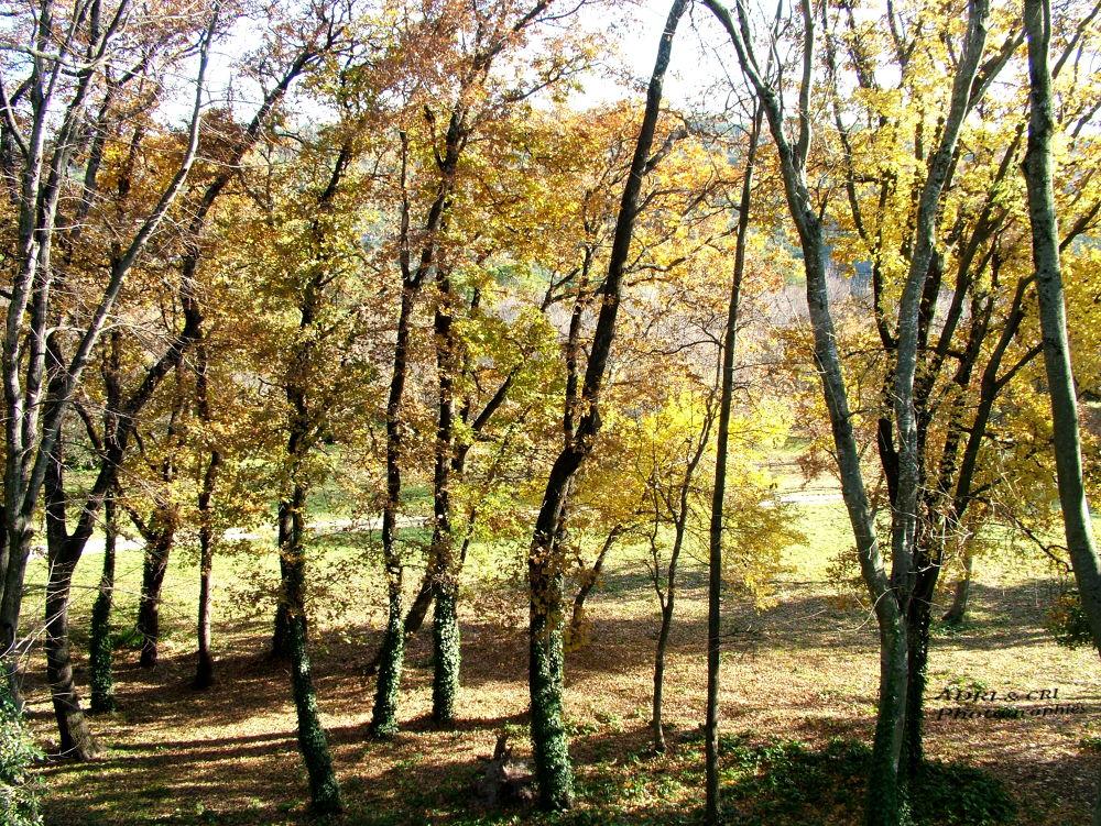 autumn by ADRI & CRI Photographies
