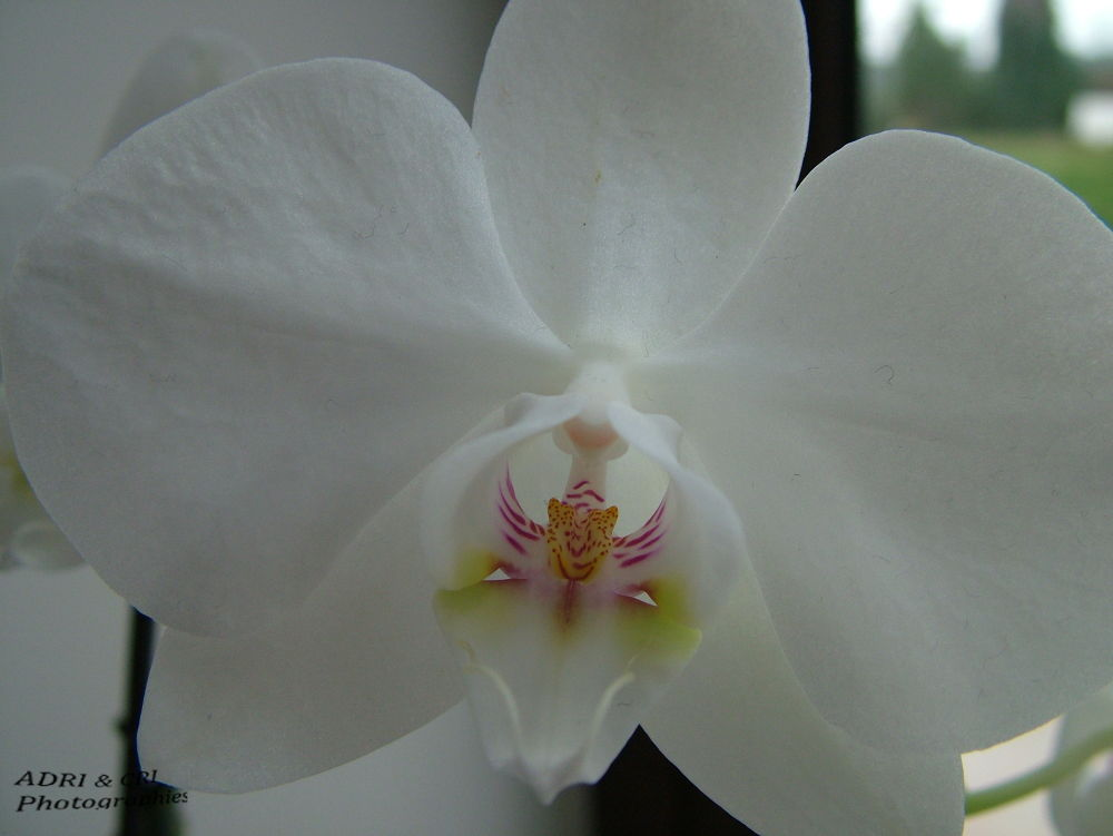 orchid by ADRI & CRI Photographies