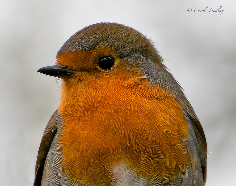 The Art of a Robin by cazfindlay