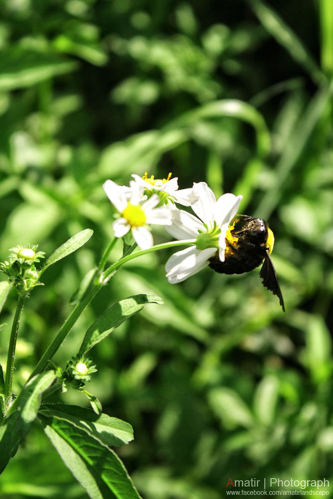 flower and bee by ewanbruanx