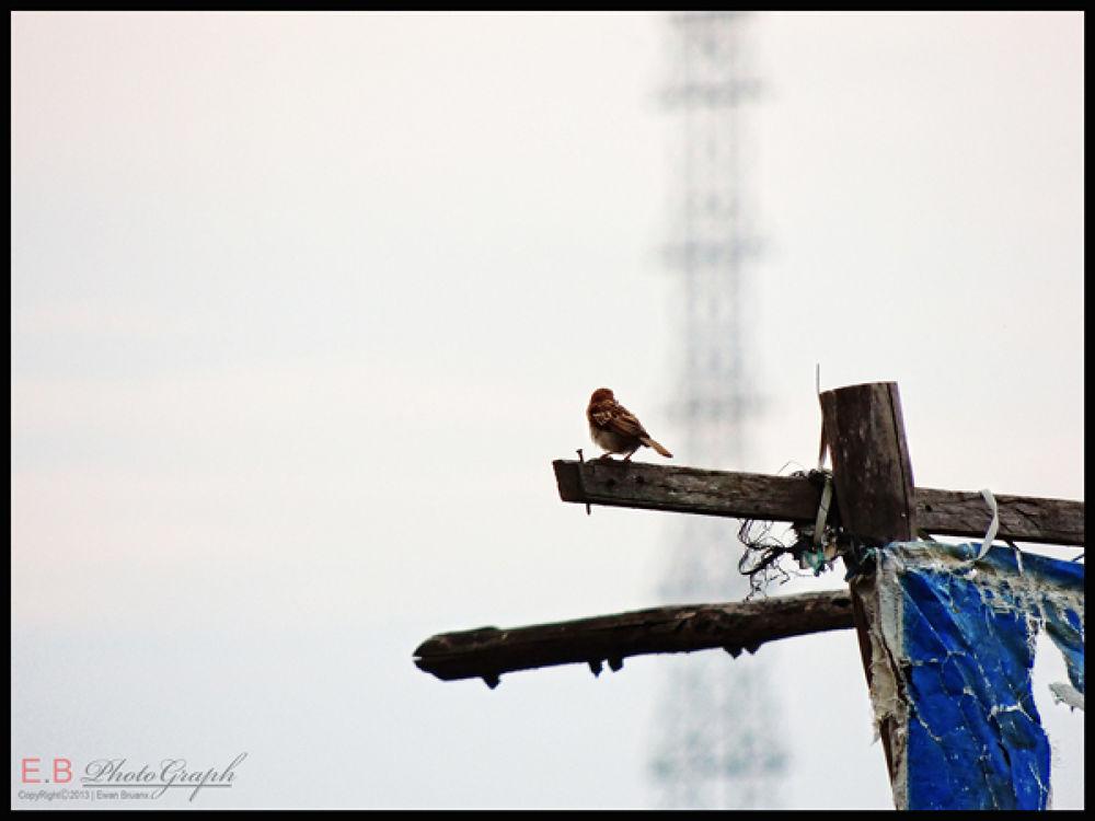 the bird... by ewanbruanx