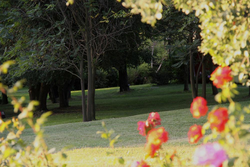 jardin3 by Anadgar03