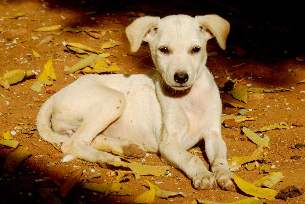 my lovely dog by mansoonprashi