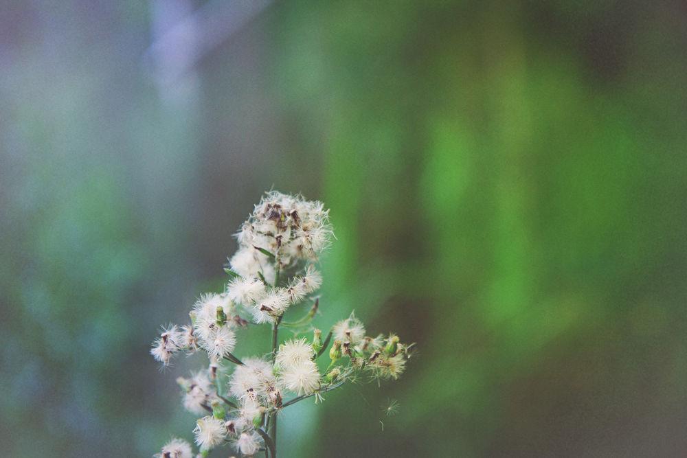 flower by dhanardya