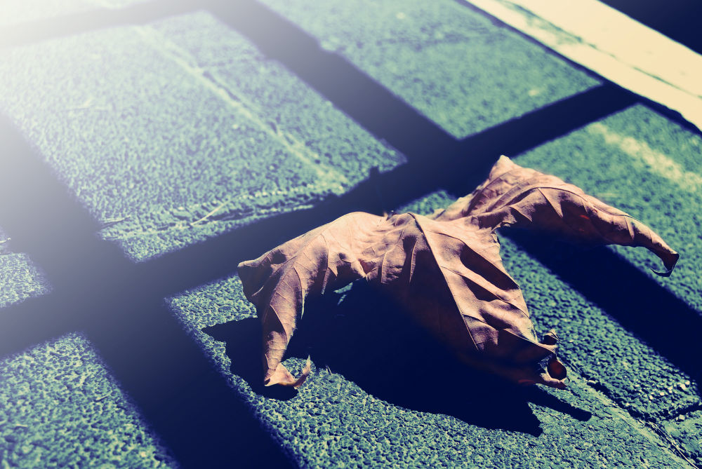 Fallen ..  by Ayham Ktait