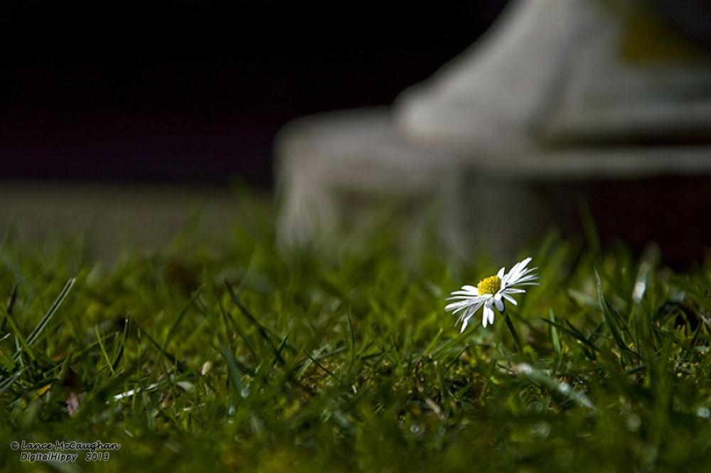 Daisy Alone by hippynz