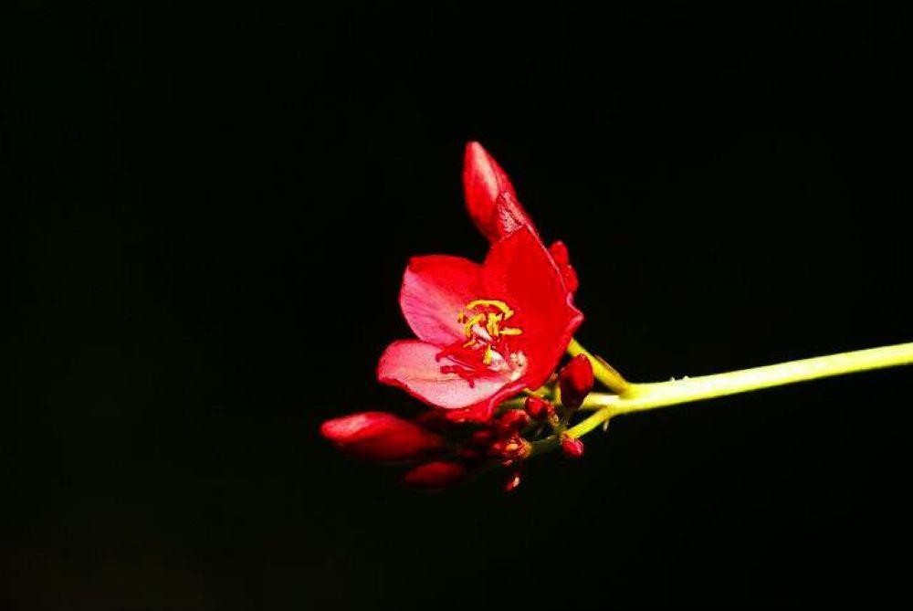 Gorgeous by MrPhotographer