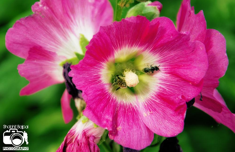 clrr facebook flower by shobhitbajpai1