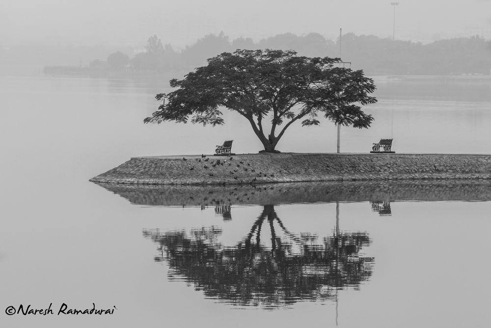 Reflection of Serenity by nareshramadurai