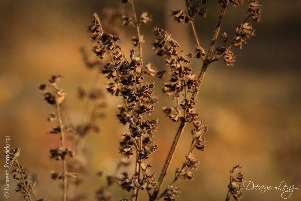 Dry Focus I by nareshramadurai