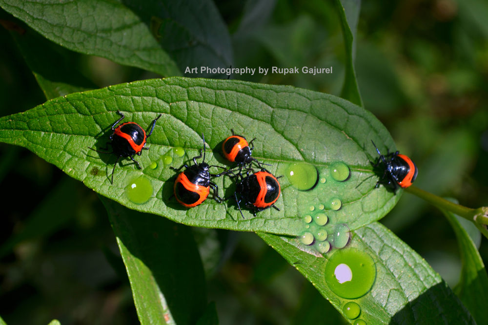 Rupak Photography  by Rupak Gajurel