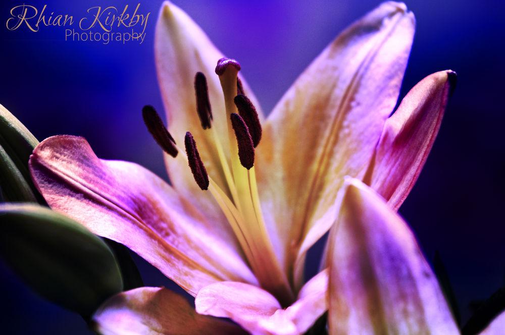 fresh from the heart by Rhian Kirkby