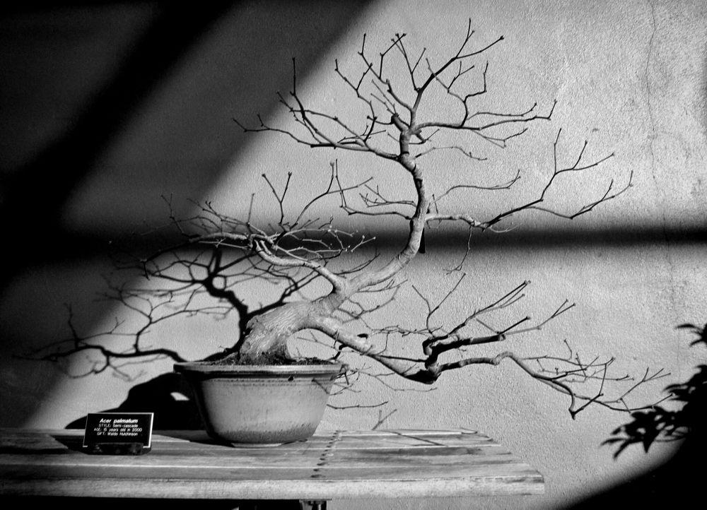 1393 by Photographybycintron