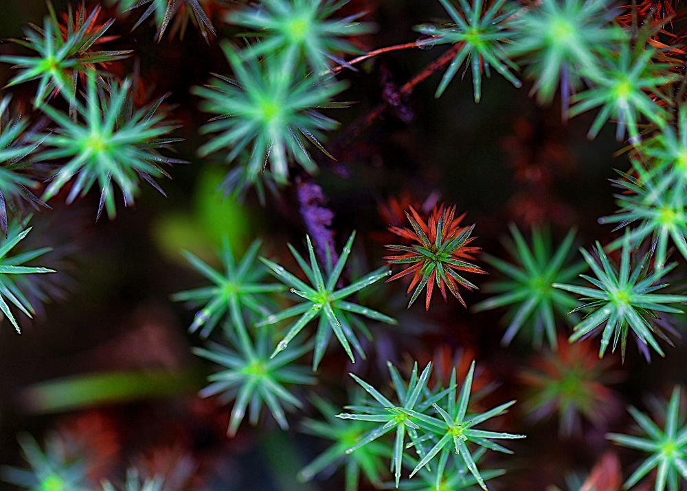 microflowers by andré figueiredo