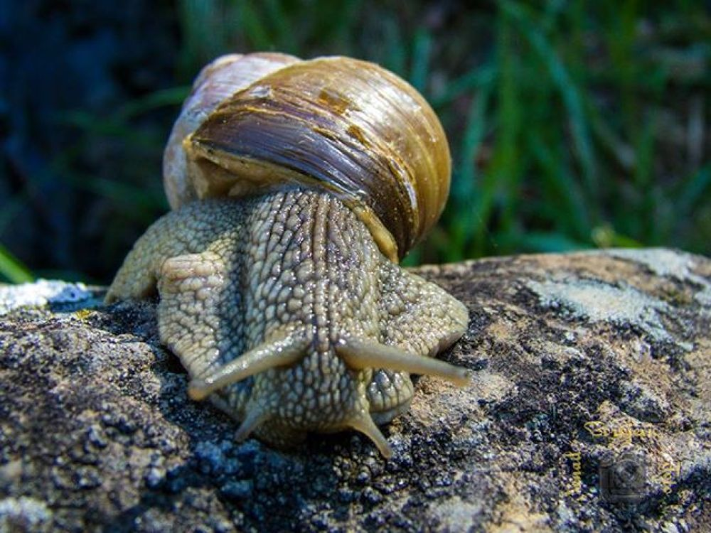 The rise of the snail !  by nenadborojevicfoto