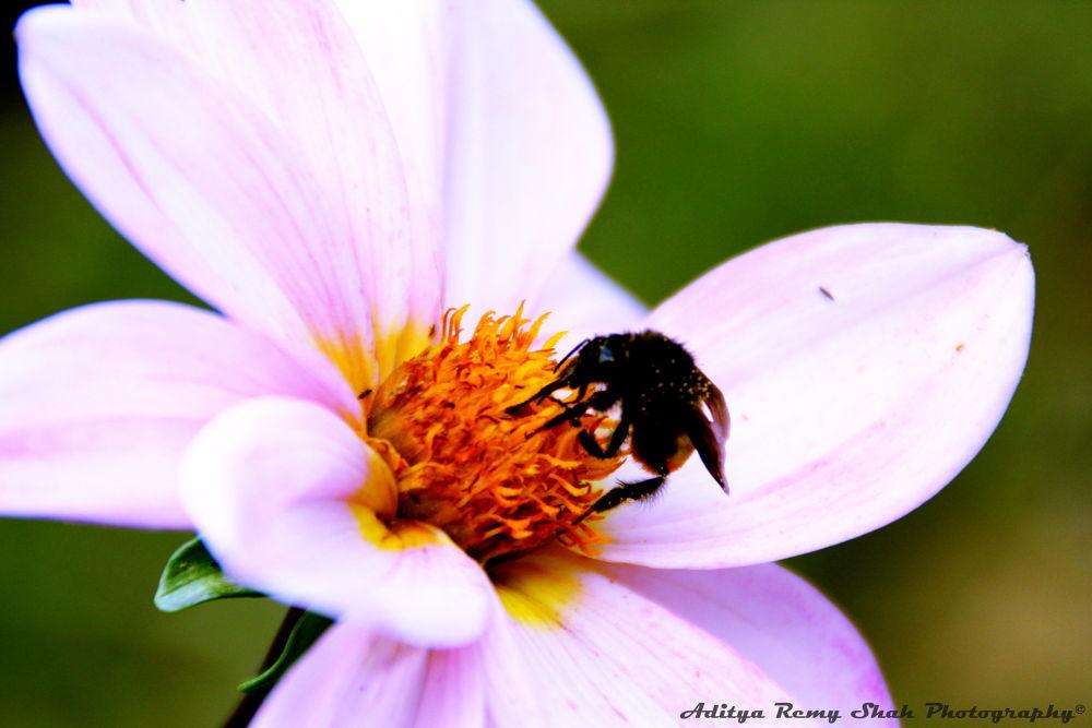 Pollination! by Aditya Remy Shah
