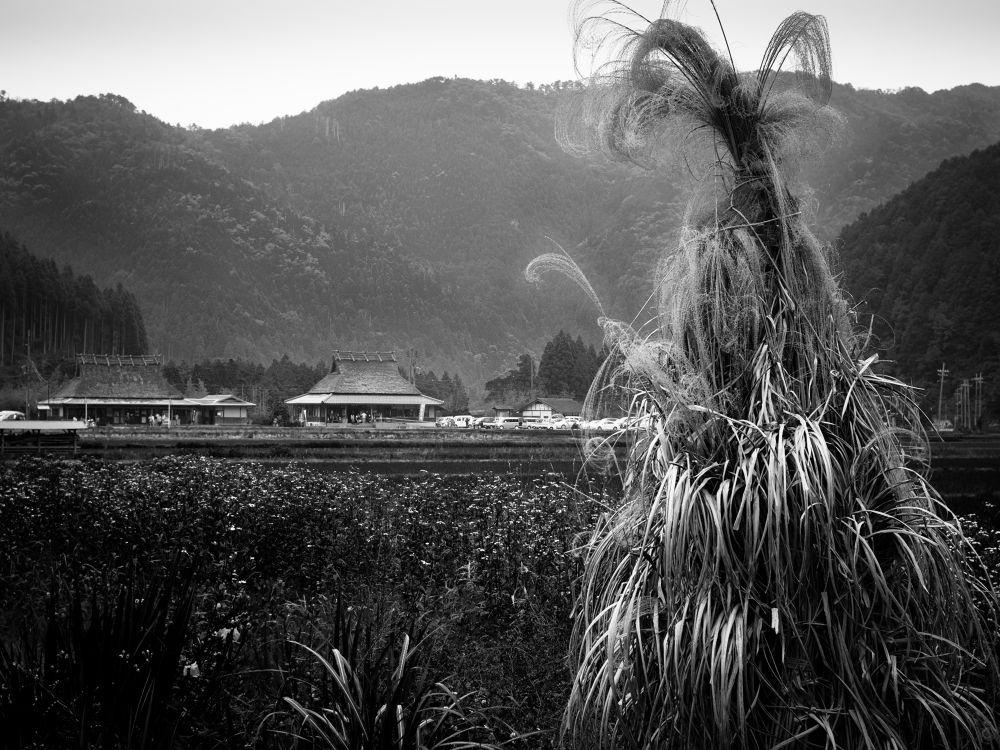 Harvest season by shinichiinoue9619