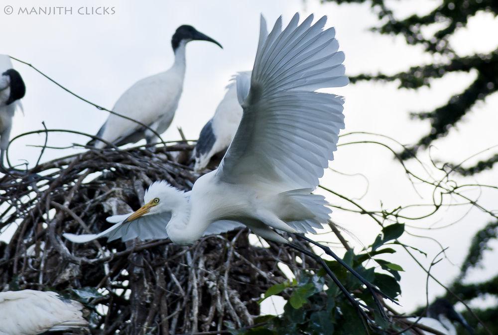 Taking off.. by Manjith Babu