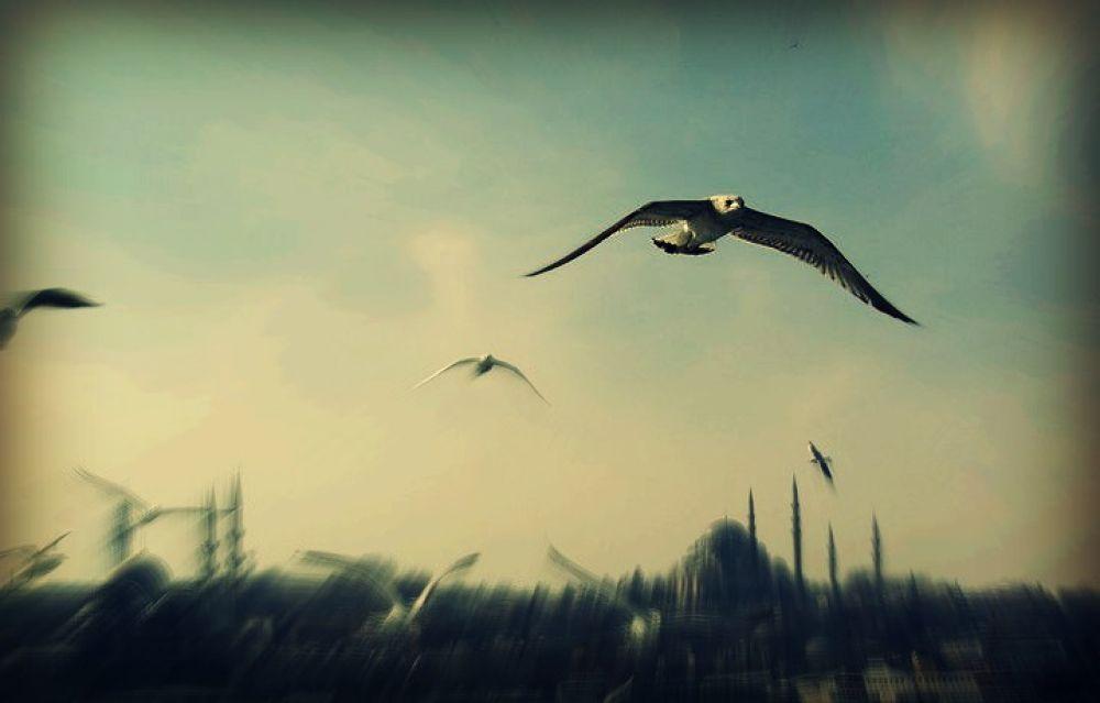 sea gull by cigdem
