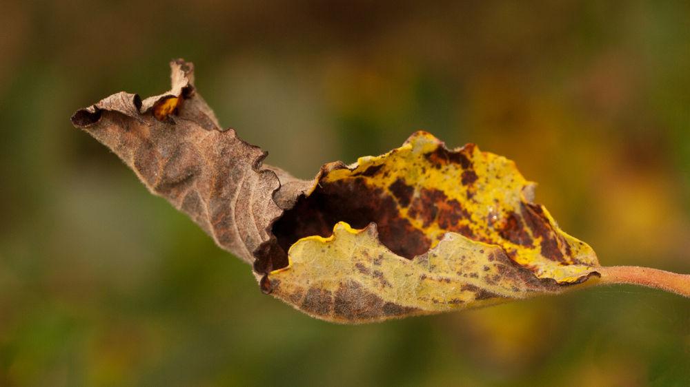 Autumn by gezienapomplooman
