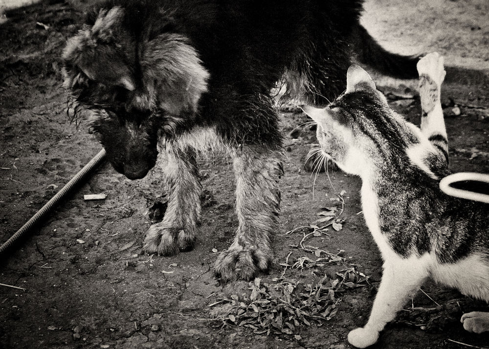 ...don't...!!! by iglumee