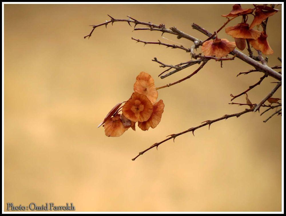 flower by omidfarrokh