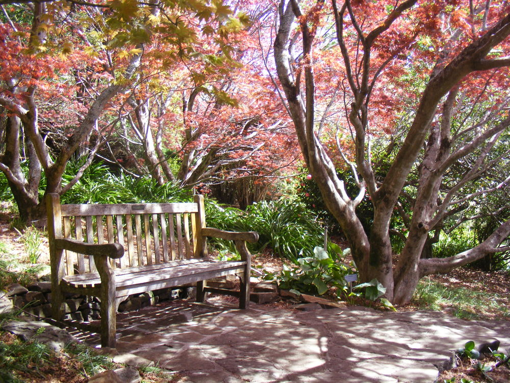 Seat in Mt Tohma Botanical Gardens Mt Thoma NSW  by davo789