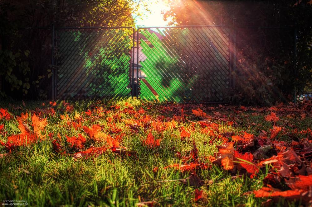 Light and Fall by salehinchowdhury