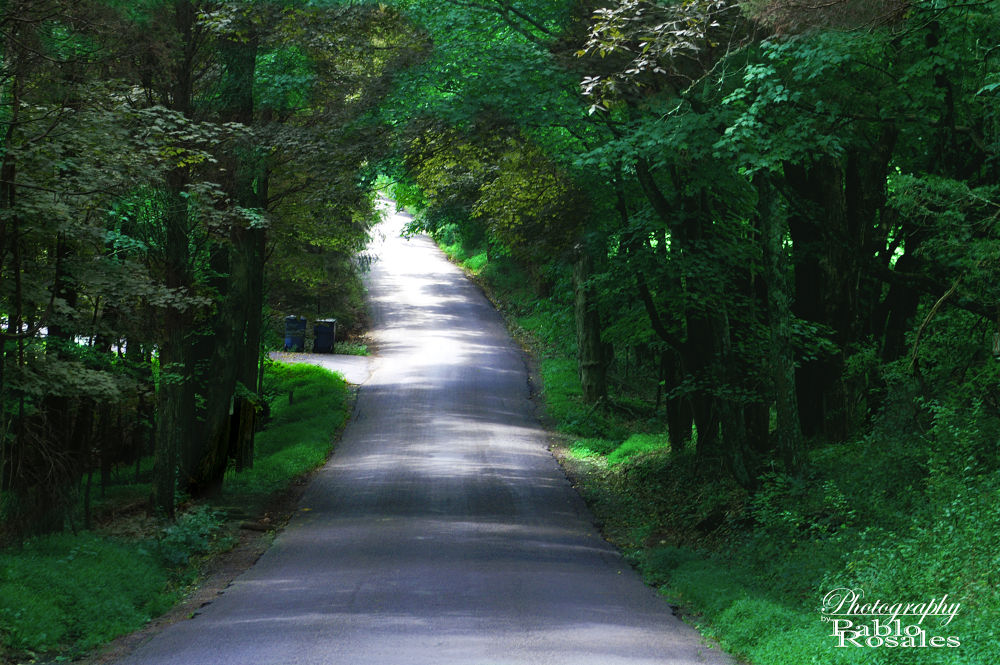Photo in Rural #road #country #woods