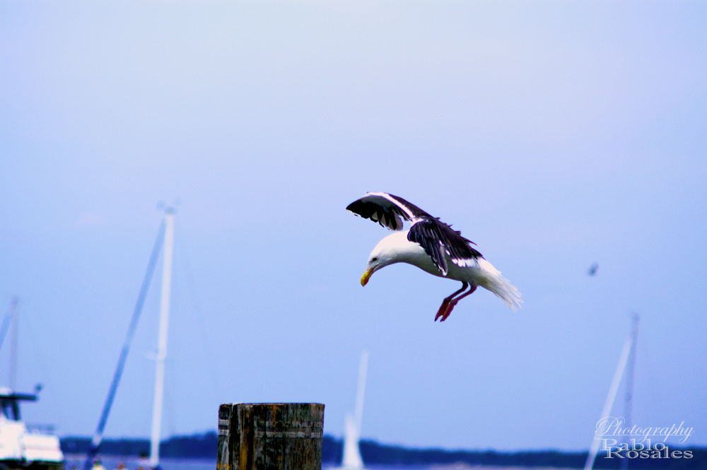 LANDING by Photography by Pablo Rosales