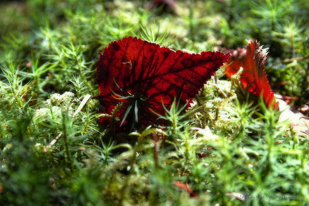 Fallen leaves by Yuichi Harada