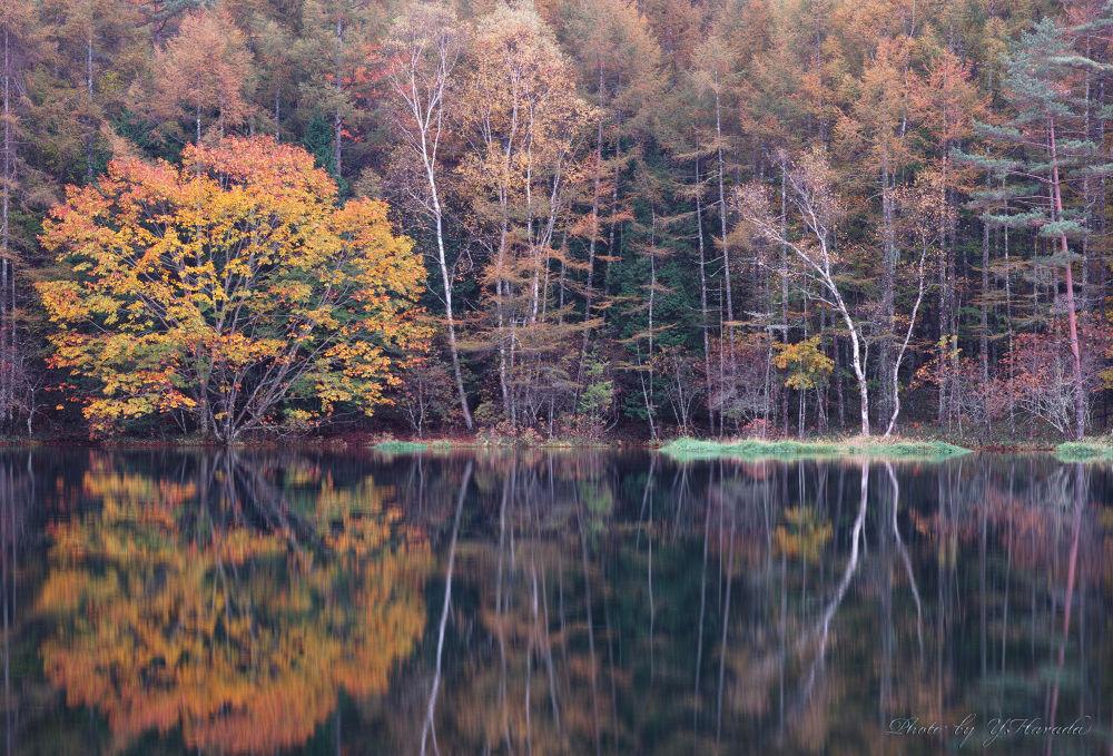 Autumn by Yuichi Harada