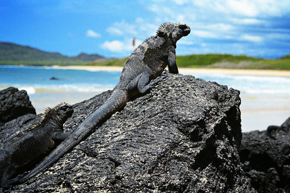 Galápagos by Jimmy Duarte