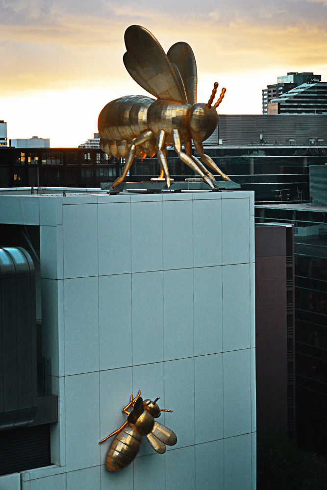 Bees - Melbourne by Jimmy Duarte