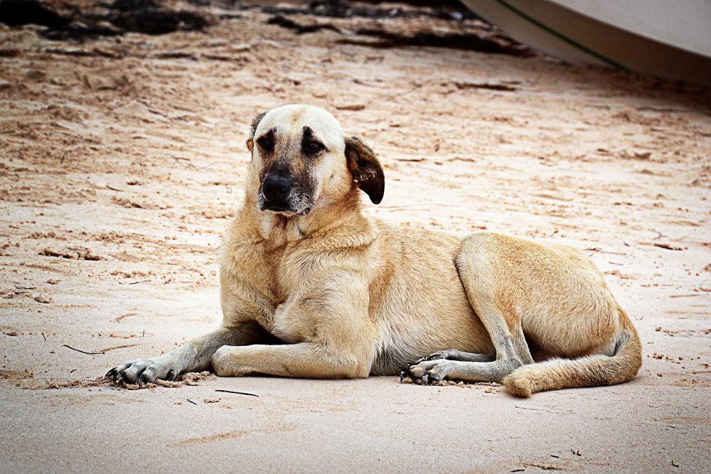 Lazy Dog by Jimmy Duarte