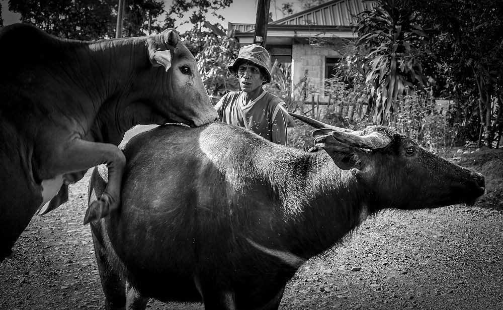 Animal Lover by k2ykitz