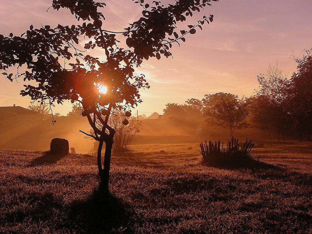 Reggeli köd! by danyimagdolna