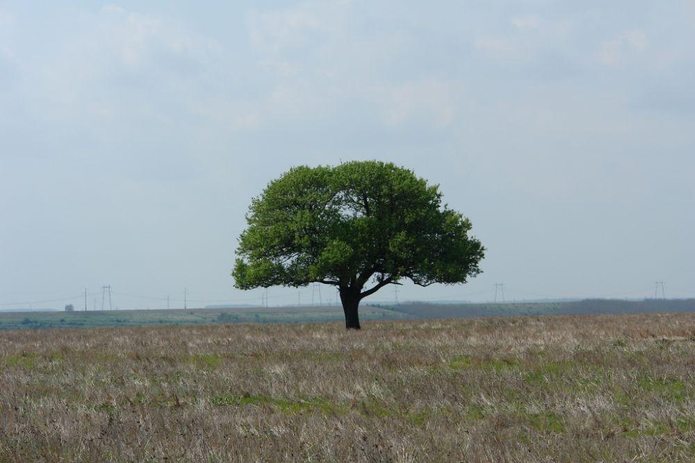 grandiose solitude by Japonkat