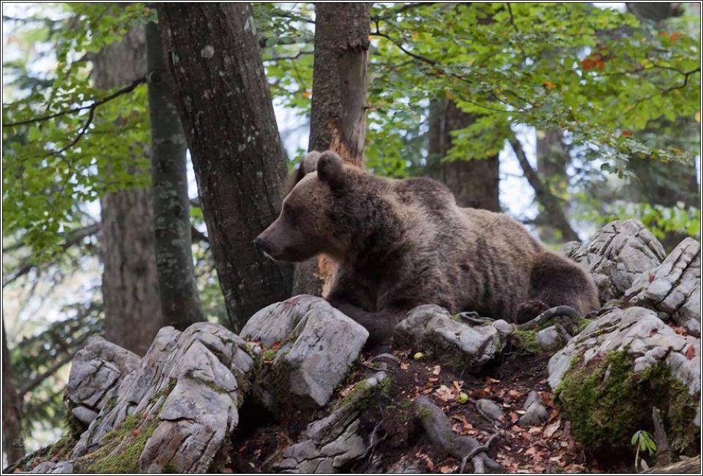 Bear (mom) by Diego Turel