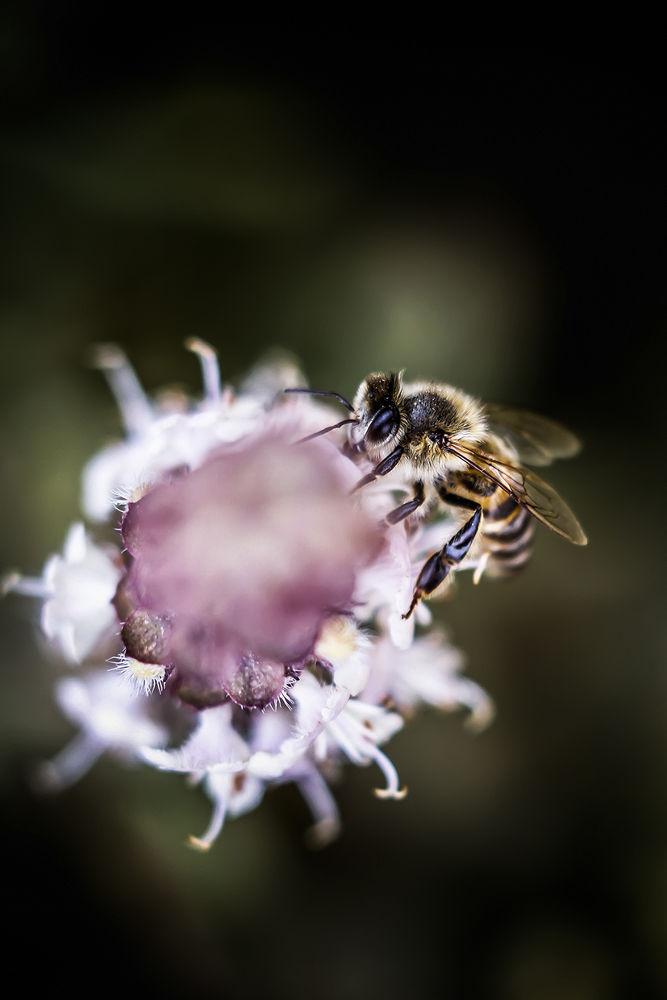 Bee by Zyad M. Elkadiki