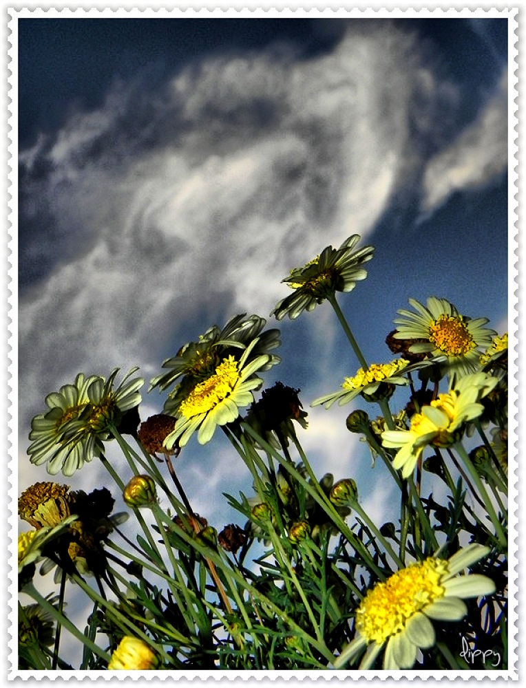 Photo in Random #clouds #flowers #nubes #flores