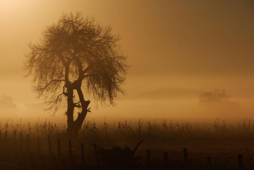 Around The Sun by Sebastian Merca
