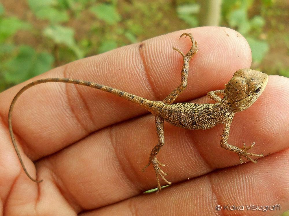 Baby Chameleon II by Kaka_Visiograffi