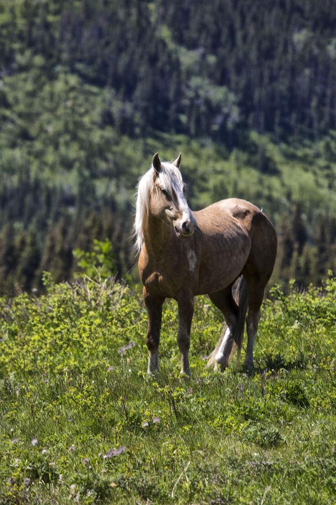 Horse near Glacier National Park by WendyFloyd1