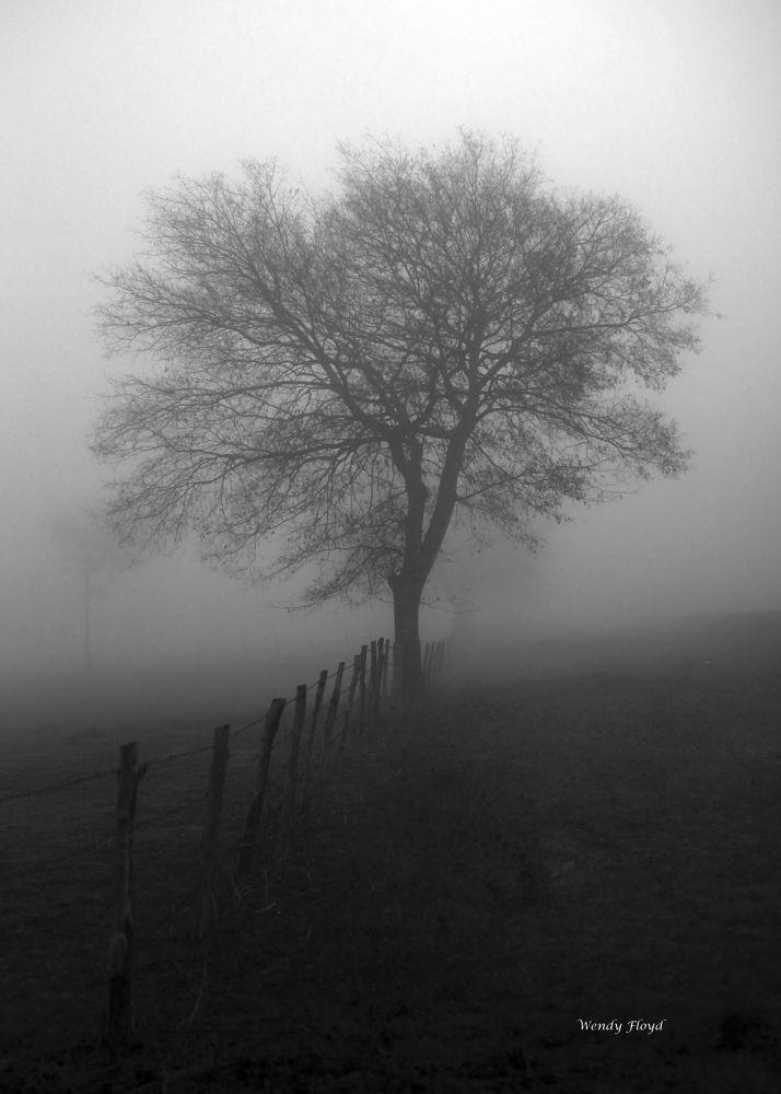 In the Fog by WendyFloyd1
