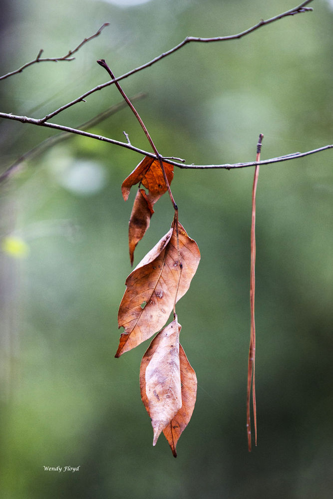Brown Leaves by WendyFloyd1