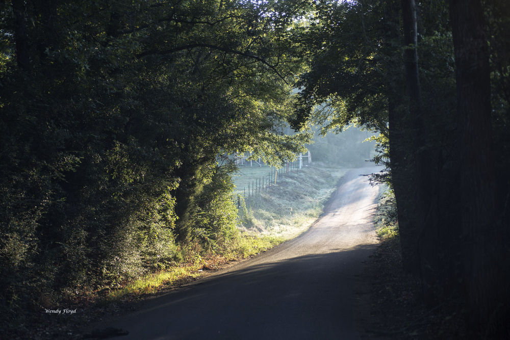East Texas Country Road by WendyFloyd1