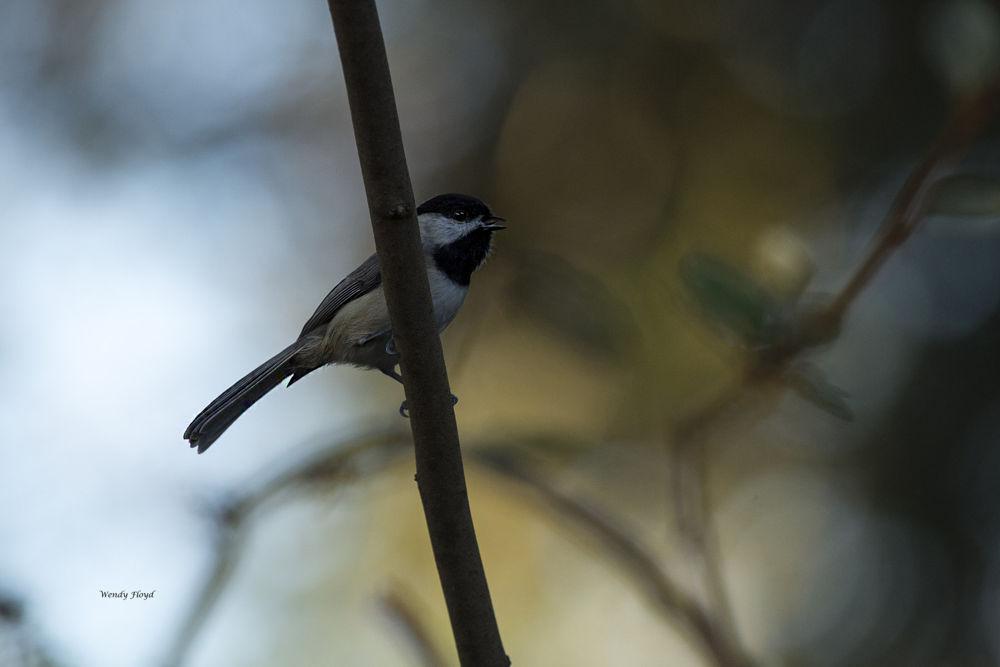 Bird by WendyFloyd1