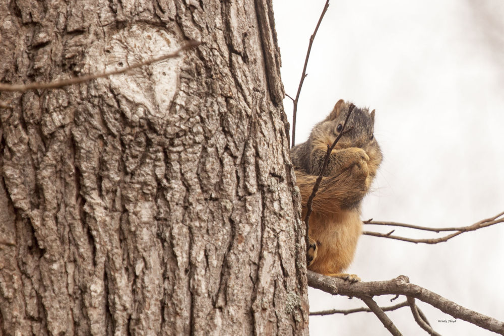 Squirrel by WendyFloyd1